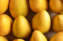 yellow pakistani mangoes