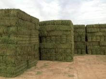 Alfalfa hay, fish meal, bone meal, yellow corn animal feed, blood meal