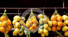 Fresh Navel oranges/Fresh Lemons/Fresh Mandarins/Fresh valencia oranges/Fresh Lime