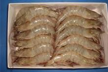 quality frozen cooked shrimp vannamei