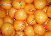 Fresh Grapefruits ( pomelo )