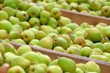 ya pear/pear farm/pear fruit fresh