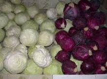 2017 new crops wholesale fresh vegetables and fresh cabbage for hot sale
