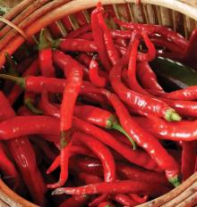 High quality red chili cayenne pepper
