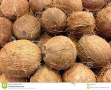 Best Mature Coconut for sale