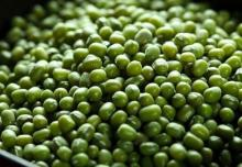 High Quality Green mung beans