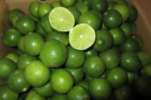 Fresh Green Lime Seedless