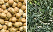 Chickpeas, Pigeon Peas or Toor Dal Whole