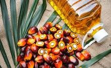Refined Palm Oil - Olein CP10, CP8, CP6