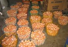 Fresh Table Chicken eggs