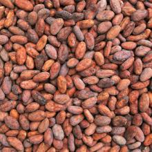 High Grade Cocoa Beans and Cocoa Nibs
