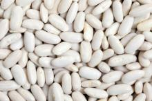 WHITE LONG KIDNEY BEANS
