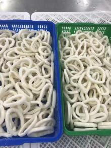 Frozen Squid Fish Rings