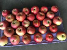 fresh mountain gala apple