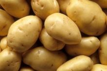 Holland -Potato/yellow holland -potato/Fresh Irish -potatoes
