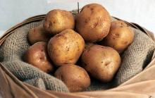 Fresh .Round. =Irish Potatoes.