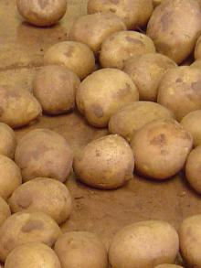 Best -Quality Fresh -rish -Potatoes