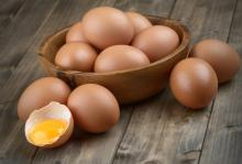 Fresh Chicken Eggs Exporters