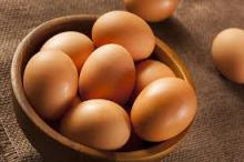 sell Fertile Hatching Chicken Egg | Fresh Chicken Egg | Ostrich Egg..
