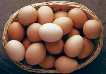 sell /buyFresh Chicken Brown Eggs, White Eggs EU & USA Grades