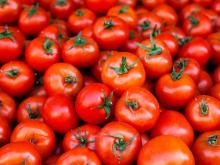 Wholesale Bulk Fresh Tomatoes Buyers