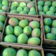 FRESH MANGO- BEST QUALITY- BEST PRICE - NATURAL