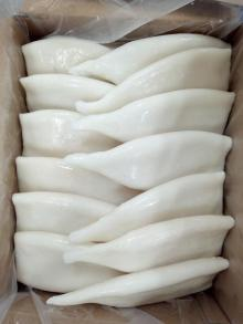 EU treated frozen squid tubes