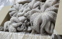 Frozen Octopus (Cleaned Baby Octopus & Mature Octopus) on 30% Discount