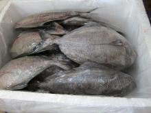 Frozen Black Pomfret. 30% discount