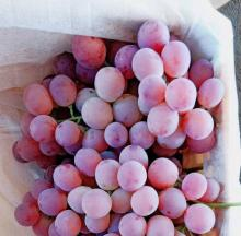 Fresh Grapes (Seedless / Seeded,Black, Green, Red) now available on sale. 30% discount