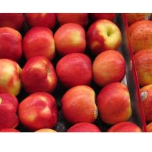 Fresh Delivery Quality Apple now Available
