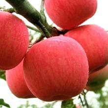 New Crop Brazilian 20kgs/carton fresh fruit red fuji apples
