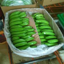 Fresh Cavendish Bananas from Brazil