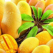 Fresh mango imported from Brazil