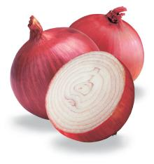 Fresh Onion for sale