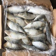 Top Quality Frozen Seafood Red Bass Whole Fish from Indonesia