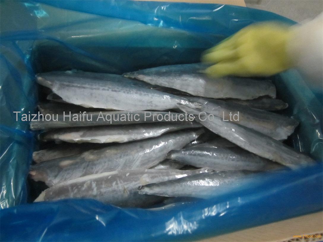 frozen spanish mackerel fillets