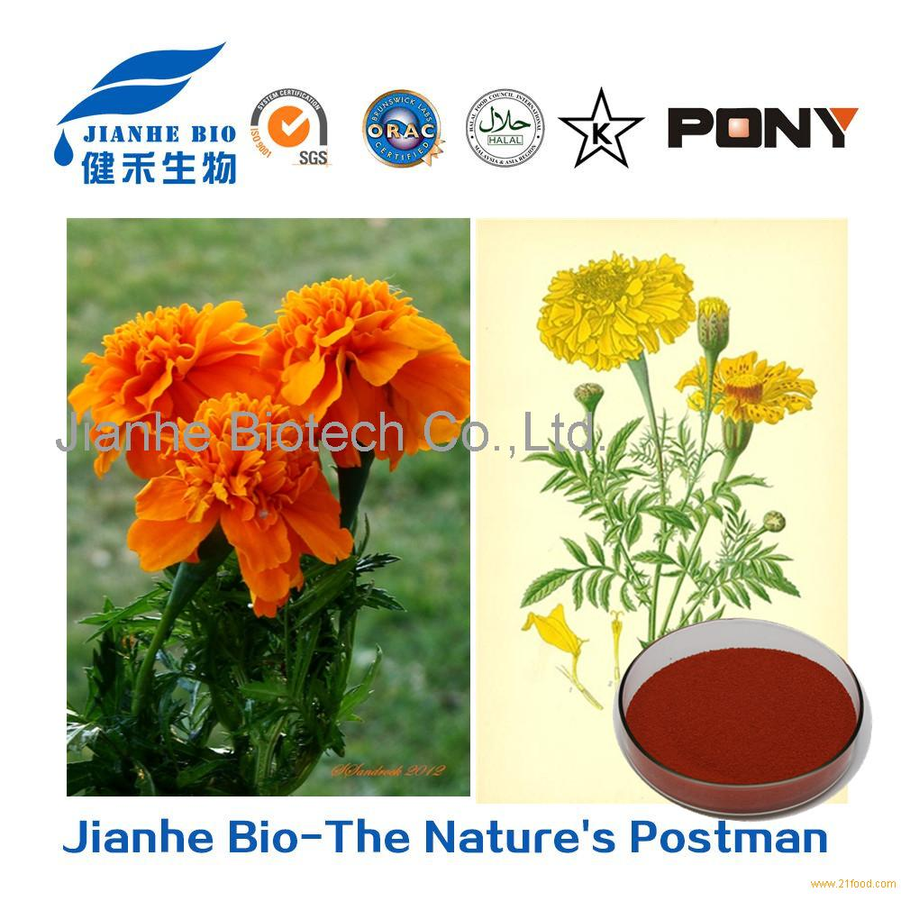 Marigold Powder/ Tagetes erecta L. / 10%-90% Lutein / 5%-20% Zeaxanthin