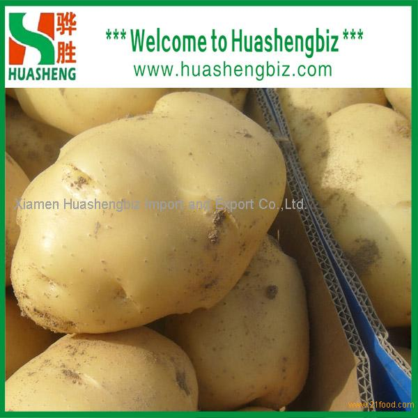 Wholesale Fresh Potatoes with best quality