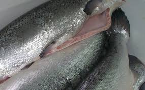 how to cook frozen salmon with skin
