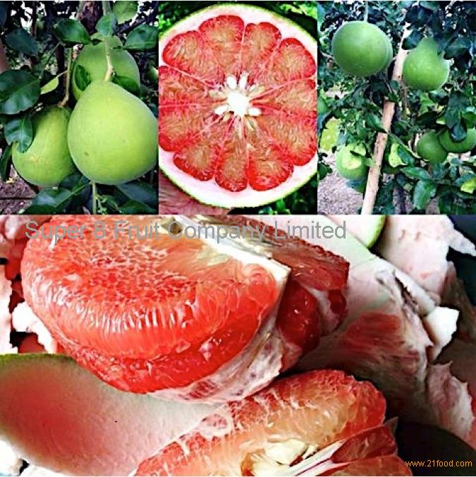 Thailand Fruit Wholesaler Email Mail: Siam Ruby Pomelo Products,Thailand Siam Ruby Pomelo Supplier