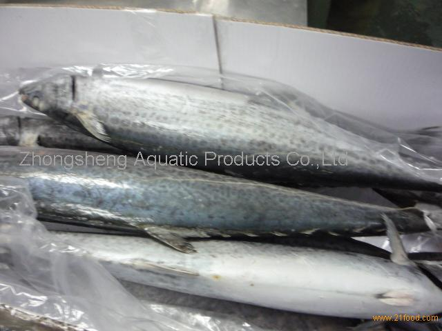 spanish mackerel whole