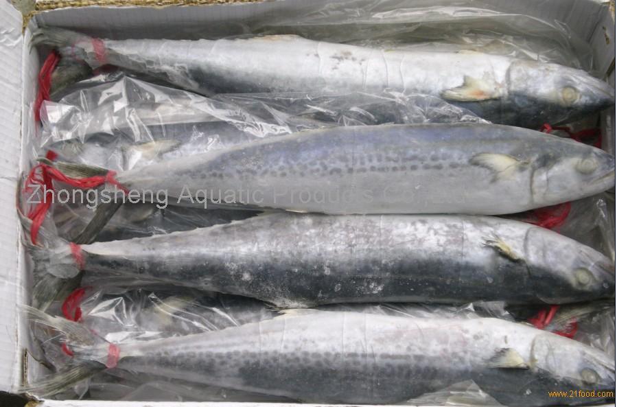 king fish whole