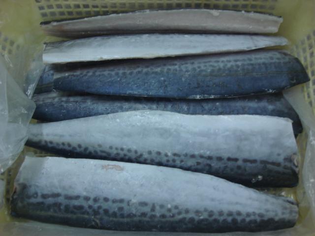 Newly processed frozen Spanish mackerel fillets