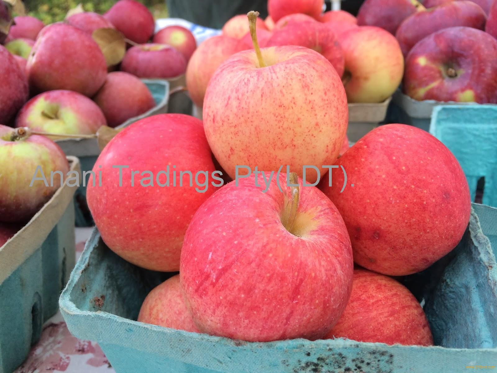 Fresh Fuji Apple/Fresh Apples