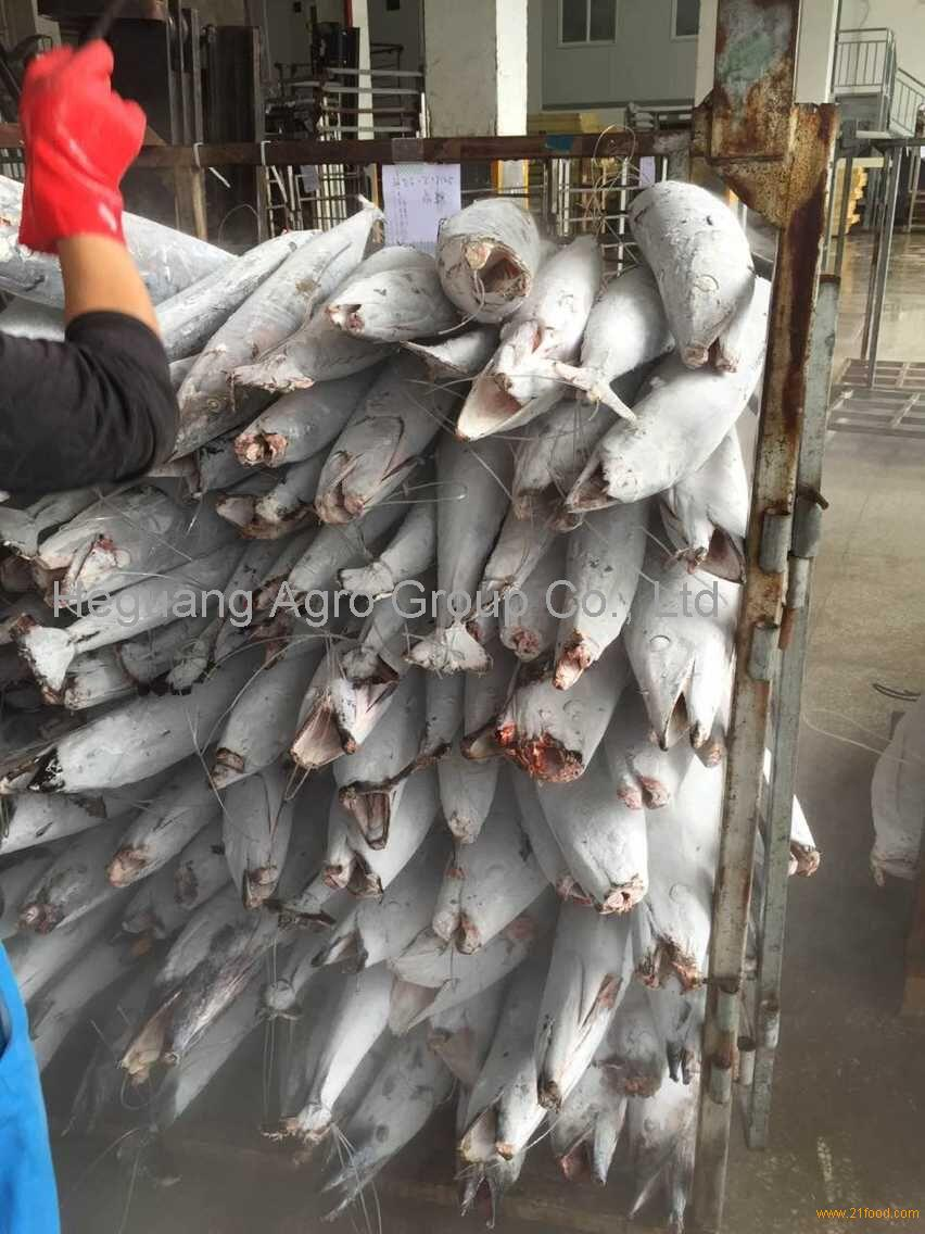 Fresh giant kingfish wahoo fish best quality and sea for Best way to freeze fish