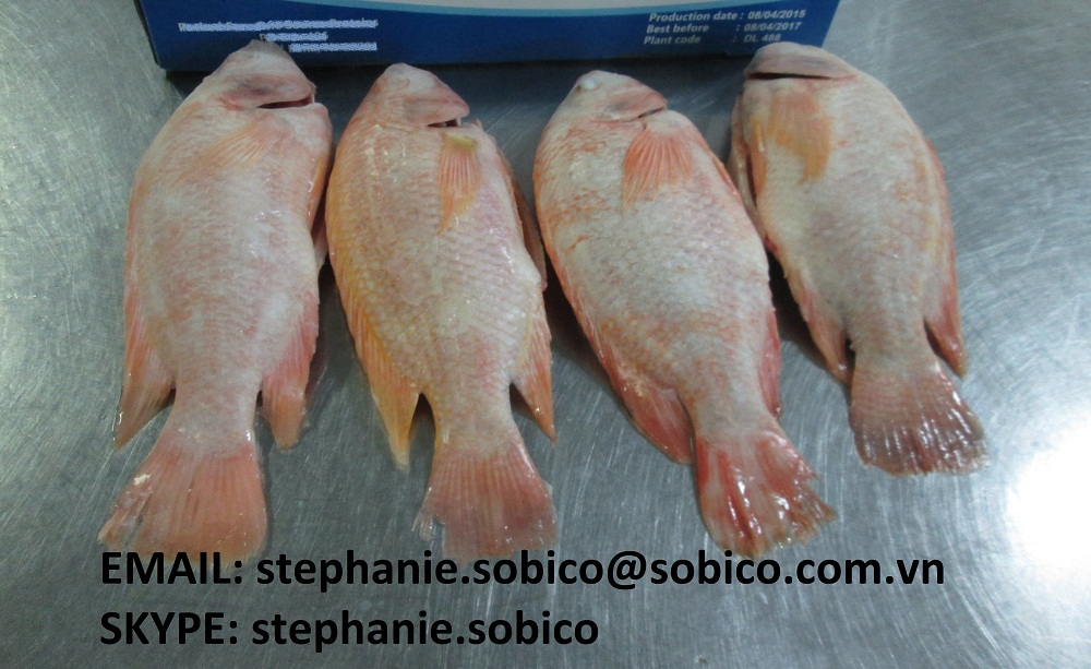 Red tilapia oreochromis niloticus whole gutted scales for Does swai fish have scales
