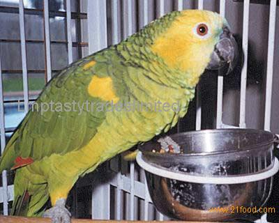 Lilac Amazon parrots and Eggs for sale