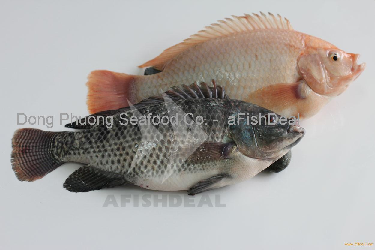 Tilapia fish products vietnam tilapia fish supplier for Is tilapia a fish