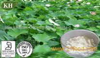 Lotus leaf Extract Nuciferine 1%-98% by HPLC